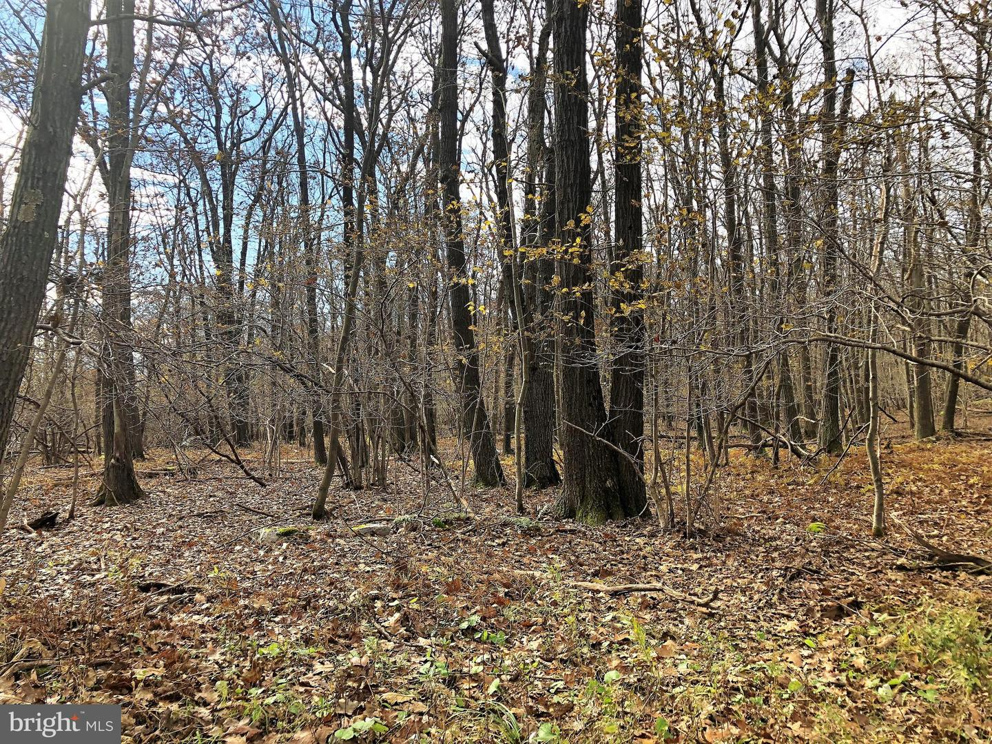 Lot 164 Shawnee View Road  , CENTRAL CITY, Pennsylvania image 10