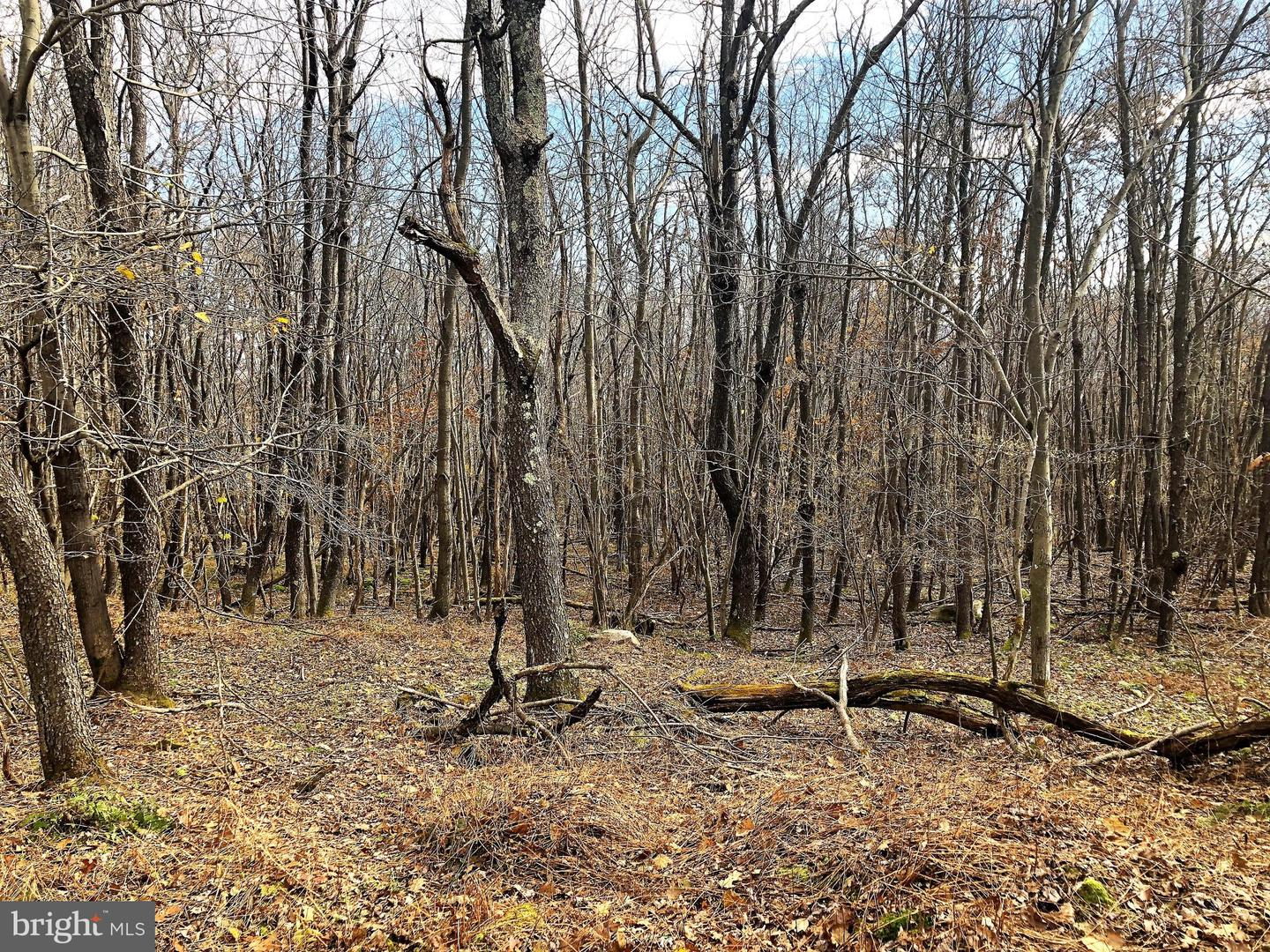 Lot 164 Shawnee View Road  , CENTRAL CITY, Pennsylvania image 2