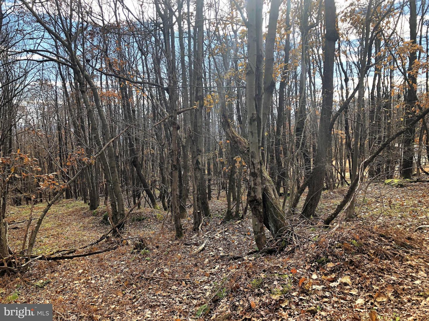 Lot 164 Shawnee View Road  , CENTRAL CITY, Pennsylvania image 3