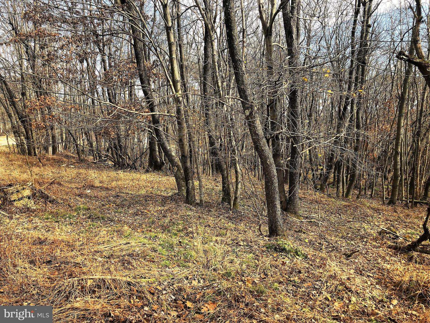 Lot 164 Shawnee View Road  , CENTRAL CITY, Pennsylvania image 4